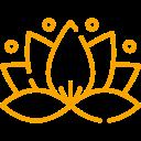 Lotus - Séances collectives